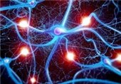 New Mechanisms Found of Cell Death in Neurodegenerative Disorders