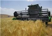 55 هزار تن گندم در شهرستان مشگین شهر برداشت میشود