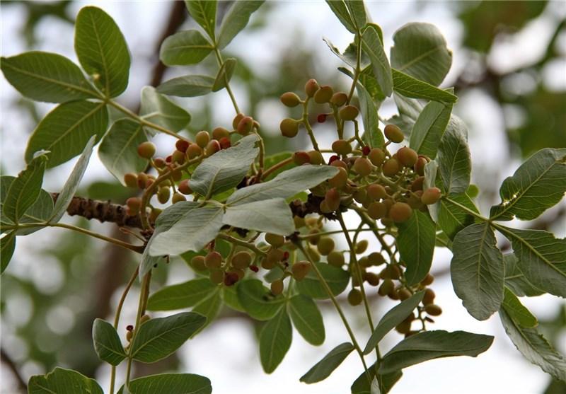 گیاهان دارویی2
