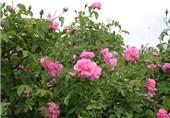 وجود 2250 گونه گیاهان دارویی و معطر در ایران