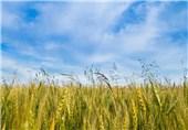 صادرات سموم کشاورزی یک شبه ممنوع شد