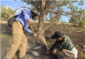 خوزستان| آتشسوزی در جنگلهای اندیمشک ادامه دارد