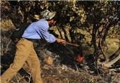 آتش سوزی در جنگلهای کهگیلویه و بویراحمد 50 درصد کاهش یافت