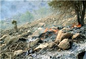 آتش سوزی جنگل لرستان7