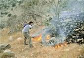 آتش سوزی جنگل لرستان10