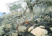 آتش سوزی جنگل لرستان11