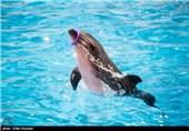 """عاقبت دلفین """"دلفیناریوم برج میلاد"""" چه شد؟"""