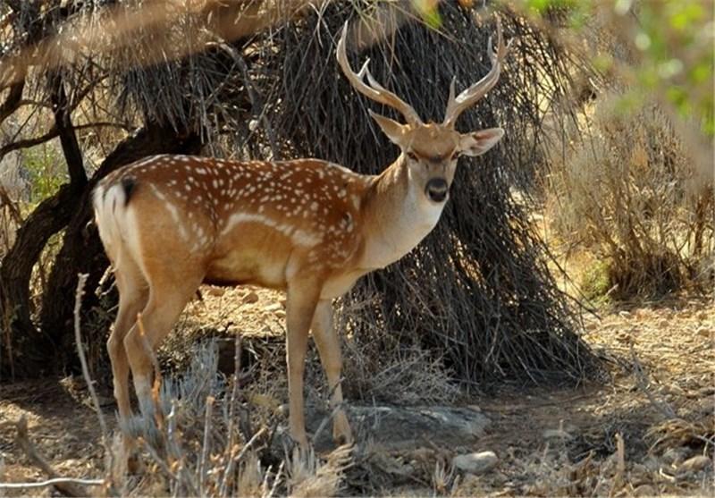 87 گونه جانوری کشور در معرض تهدید و انقراض قرار دارند