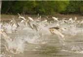 اراک| پیشبینی تولید 5 هزار تن انواع آبزیان پرورشی در استان مرکزی