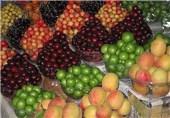 گرانی به عمده فروشی میوه رسید/ قیمت 5 تا 30 هزار تومان