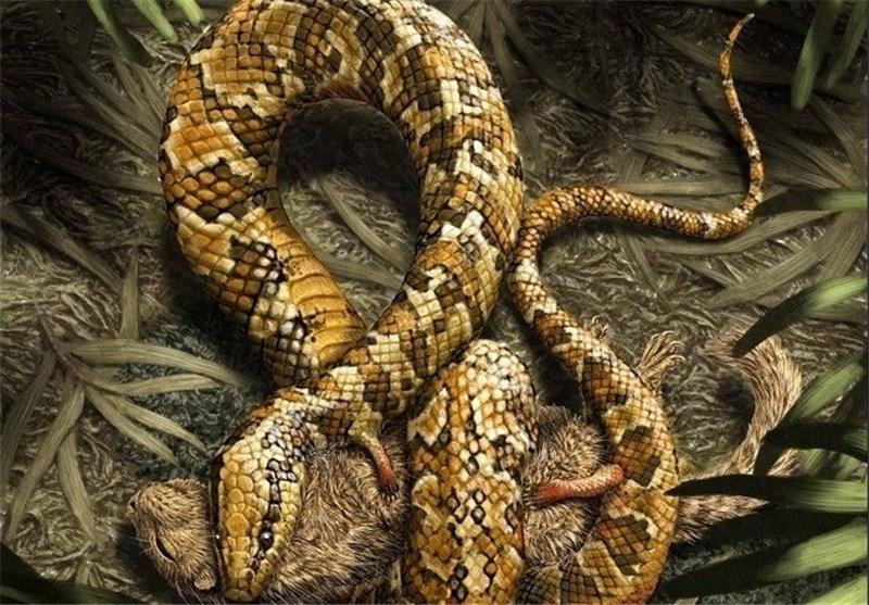 Researchers Find Odd Four-Legged Snake Fossil, Descendent of Modern Snakes
