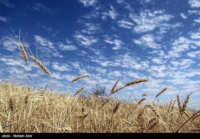http://newsmedia.tasnimnews.com/Tasnim//Uploaded/Image/1394/05/04/139405041200378365756564.jpg