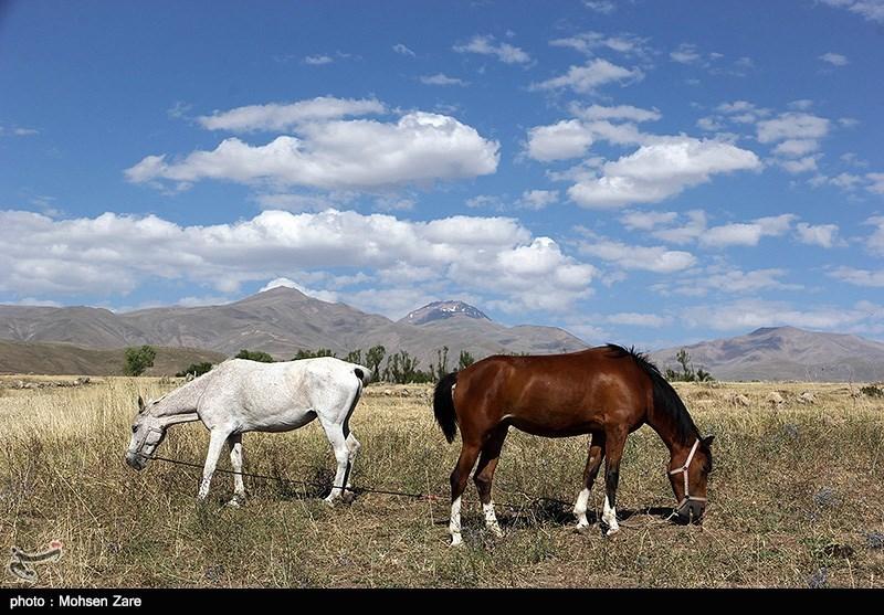 http://newsmedia.tasnimnews.com/Tasnim//Uploaded/Image/1394/05/04/139405041200391625756564.jpg