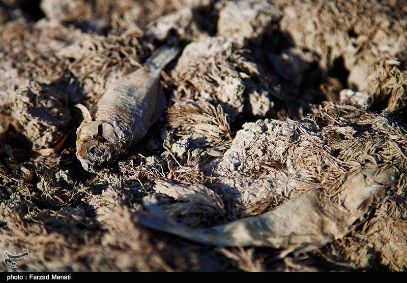 رودخانه رازآور در کرمانشاه خشک شد+تصاویر
