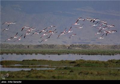 تالاب بینالمللی کمجان - شیراز