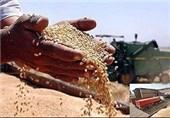 """راهاندازی واحدهای گیاهپزشکی برای مبارزه با """"آفت سنگندم"""" در استان آذربایجان غربی"""