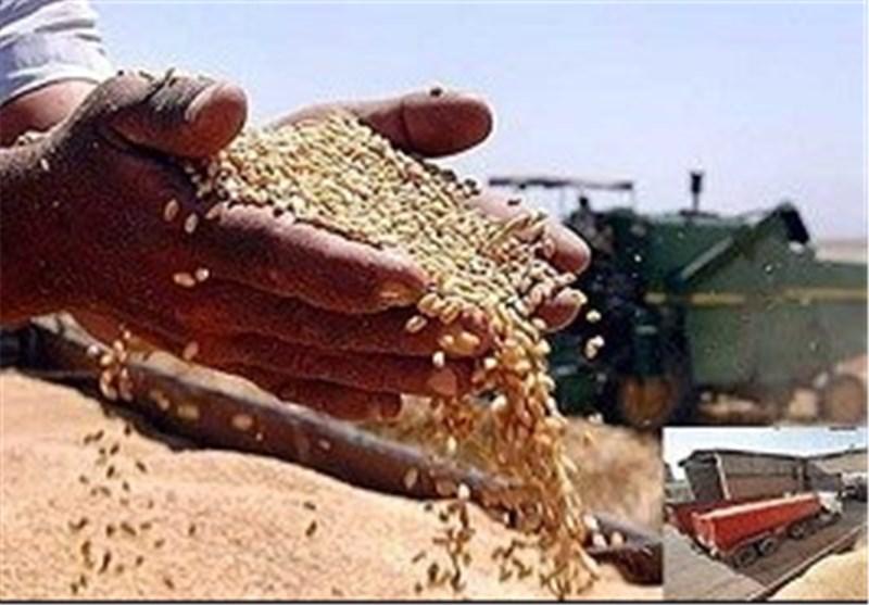 قیمت خرید تضمینی گندم در خراسانرضوی هنوز اعلام نشده است