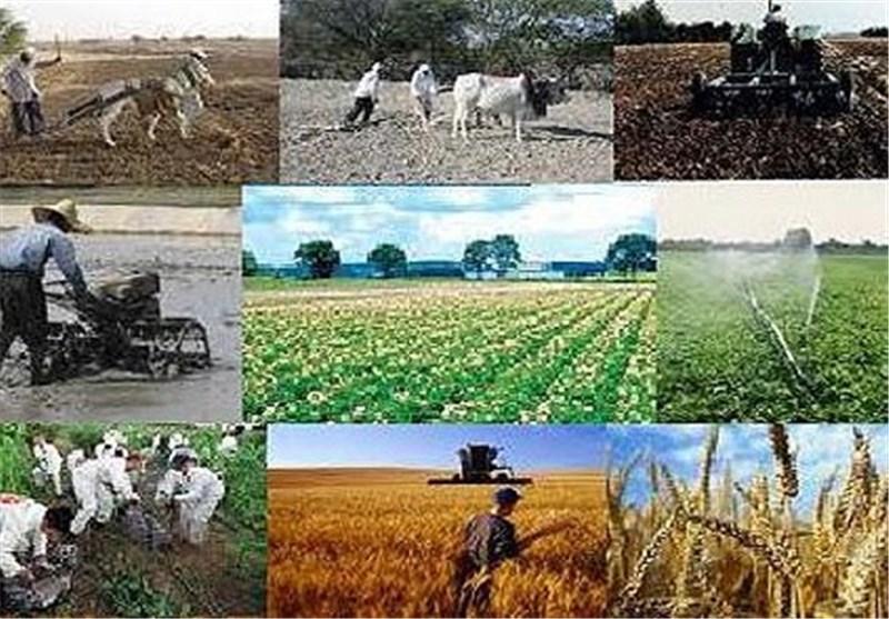 تاخیر در اعلام نرخ خرید تضمینی گندم به ضرر امنیت غذایی کشور است