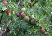 اسلام آباد میں پھل دار پودے لگانے کا اعلان