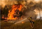 بیتدبیری دولت در کردستان/شاهد سالانه آتشسوزی چندهزار هکتاری جنگلهای کردستان هستیم