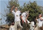 حمله شهرکنشینان صهیونیست به روستای الحانیه در غرب رامالله