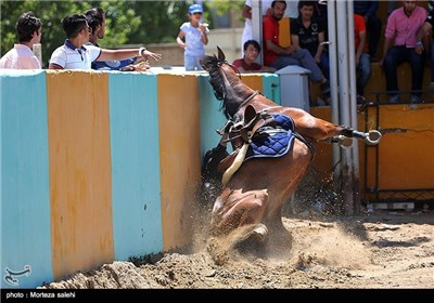 Show Jumping Competitions Held in Iran's Isfahan