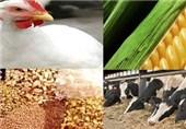نامه به 2 وزیر در اعتراض به ممنوعیت صادرات خوراک دام و طیور