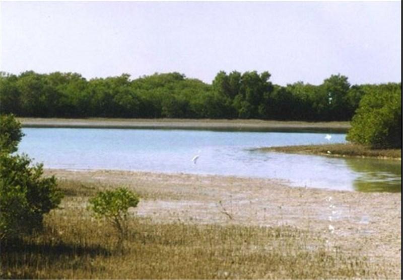 میزان آورد آب از رودخانه شاپور به استان بوشهر 50 درصد کاهش یافت