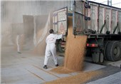 طرح خرید تضمینی گندم با قیمت مصوب دولت در استان سمنان آغاز شد