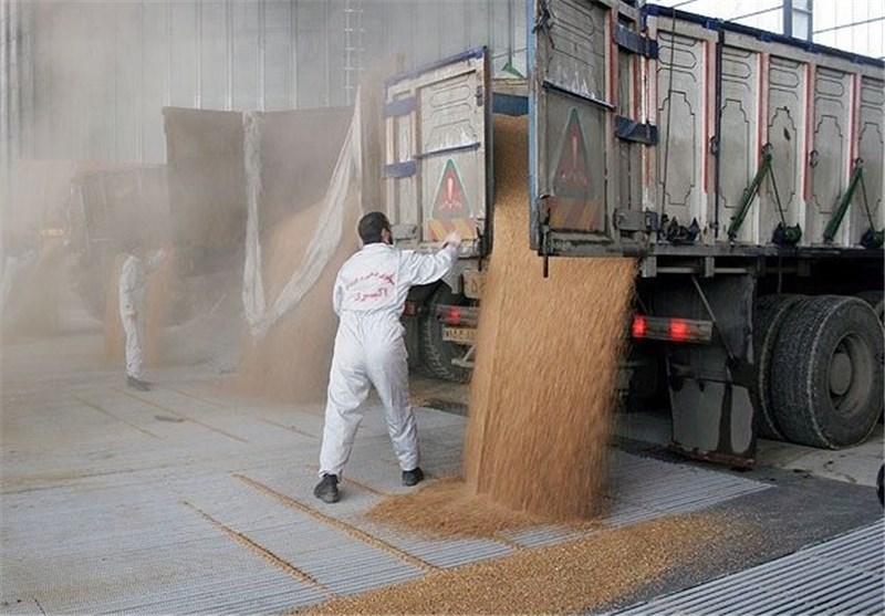 انتقال ذخیره 5میلیون تنی گندم به سال 95/صادرات 2میلیون تن در دستور کار