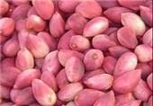 پسته تازه هم قیمت پسته خشکِ سال قبل شد + نرخ انواع میوه