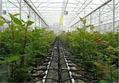 چادگان از گزینههای برتر استان اصفهان برای احداث گلخانه است