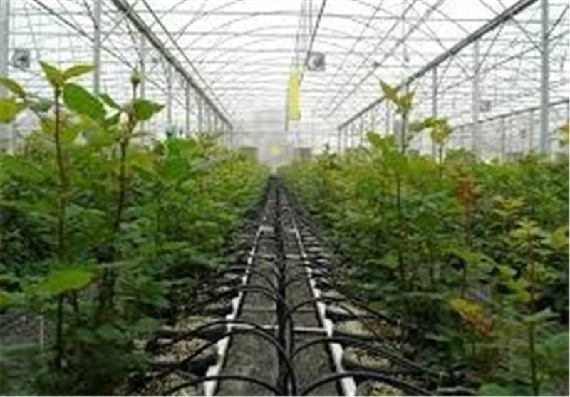 سالانه بیش از 8 هزار تن محصول گلخانهای در خراسان جنوبی تولید میشود