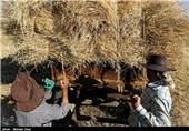 560 هزار تن گندم در اردبیل تولید میشود