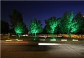 شهروندان نورپزداری بیمناسبت درختان را گزارش کنند