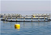 Iran, France Inaugurate Fish Farm on Southern Iranian Island