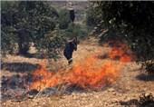 شهرکنشینان صهیونیست اراضی فلسطینیان را به آتش کشیدند