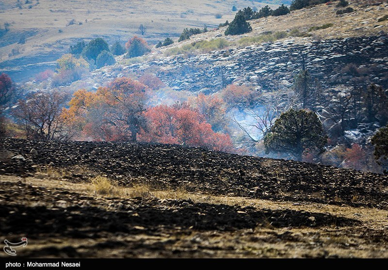 آتش سوزی در جنگل های پارک ملی گلستان