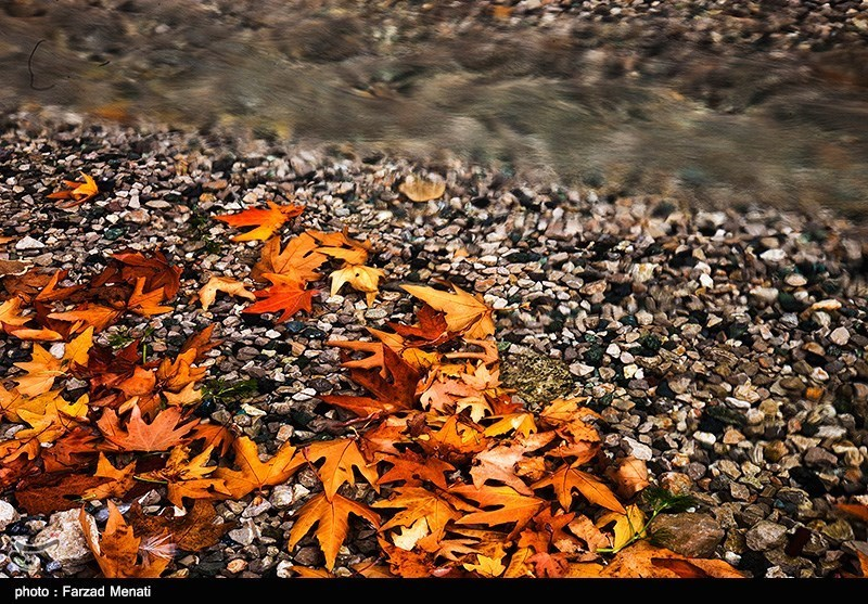 برگهای پاییزی در مشهد غنیسازی میشود