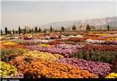 زمینه افزایش صادرات گل و گیاه از محلات فراهم شود