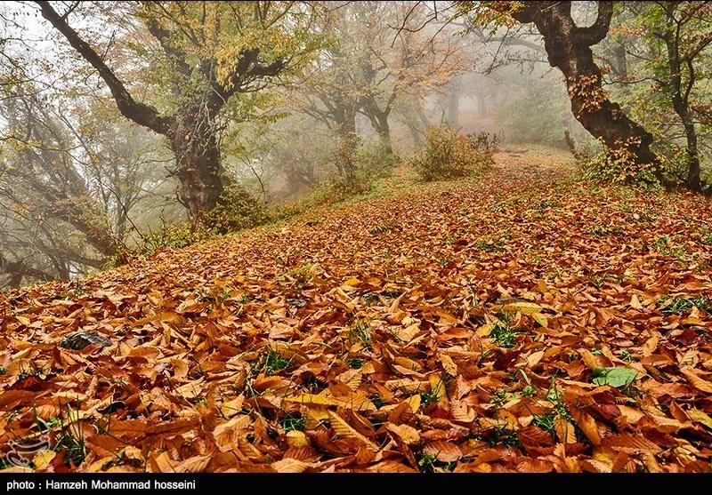 http://newsmedia.tasnimnews.com/Tasnim//Uploaded/Image/1394/08/10/139408101628288696431644.jpg