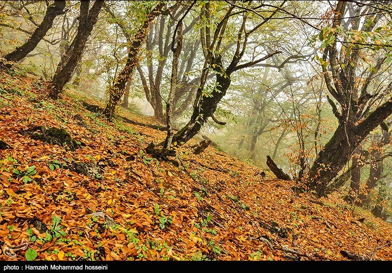 http://newsmedia.tasnimnews.com/Tasnim//Uploaded/Image/1394/08/10/139408101628289626431644.jpg