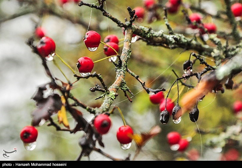 http://newsmedia.tasnimnews.com/Tasnim//Uploaded/Image/1394/08/10/139408101628299766431644.jpg