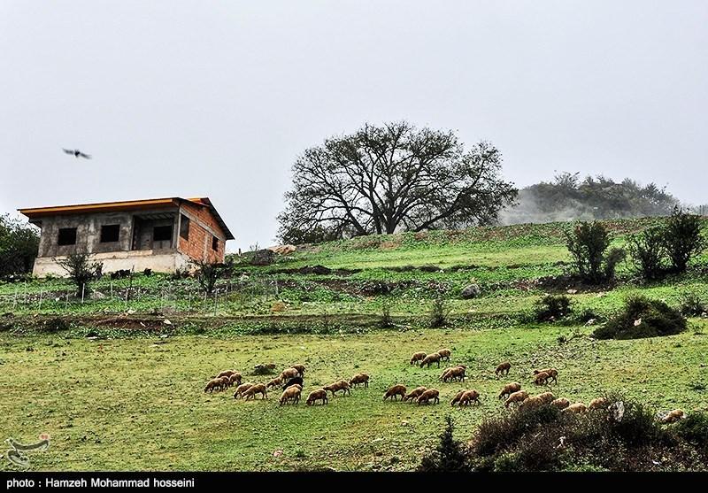 http://newsmedia.tasnimnews.com/Tasnim//Uploaded/Image/1394/08/10/139408101628304606431644.jpg