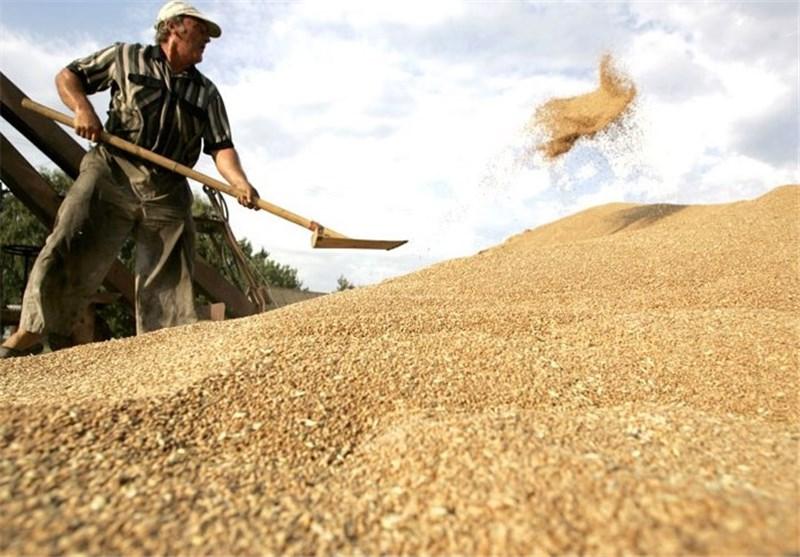 ایران 30 هزار تن گندم از آلمان خرید