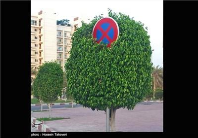 درخت قانون