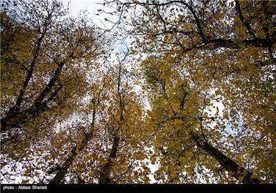 پاییز در البرز