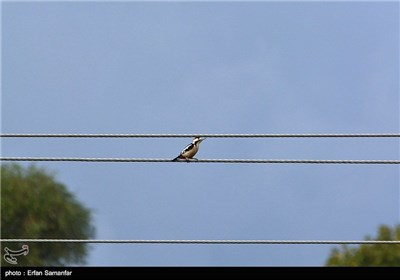 روز ملی پرنده نگری