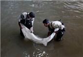 ساری| 40 کیلوگرم ماهی خاویاری قاچاق در قائمشهر کشف شد