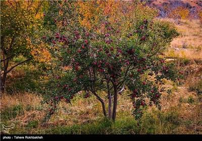 پاییز در شیراز
